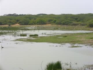 Bundala-Seen