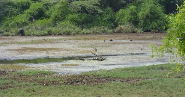 Bundala-Wasser