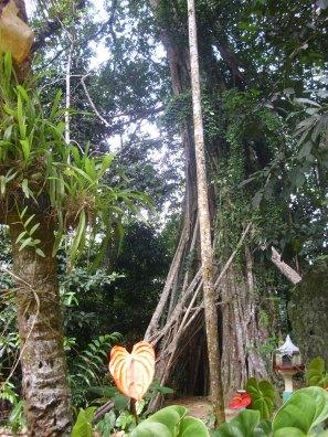 Nahe des Jungle Temple