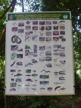 Spezies in Sinharaja