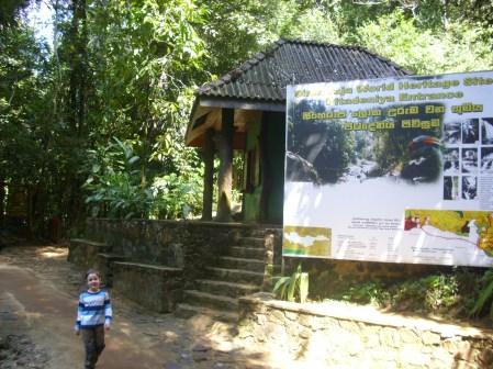 Sinharaja World Heritage Site