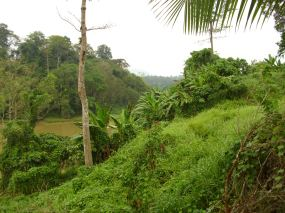 Sungai Tembeling