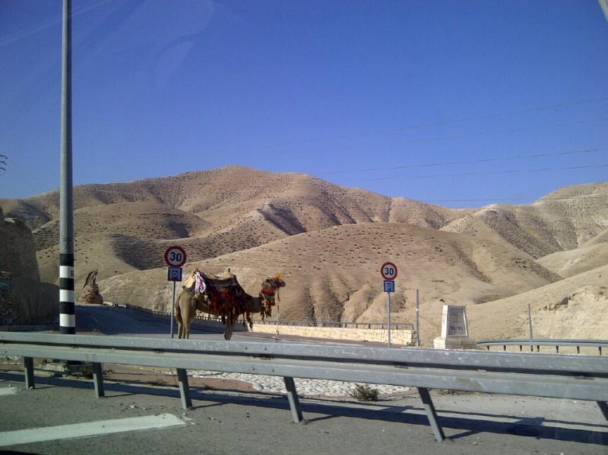 Kamel auf dem Weg zur Wüste