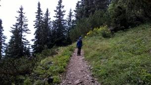 Durch den Nadelwald