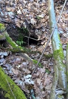 Fuchsbau-Ausgang