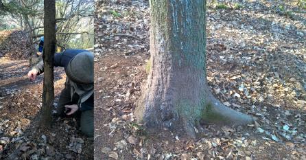 Malbäume von Wildschweinen