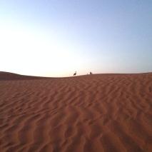 Marokko2016-AufderPirschInderWueste