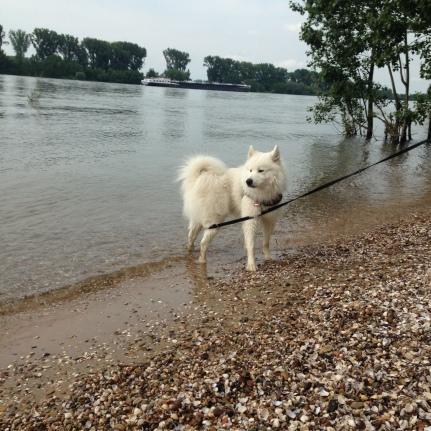 Rhein-Mai2016-Hund