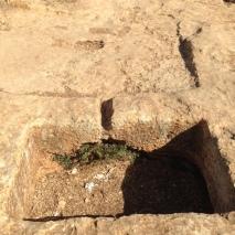 Weinpresse auf Mount Barkan