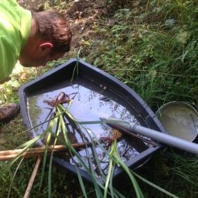 Biotop Wasser zum Auffinden von Larven